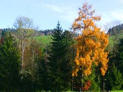 Herbst autumn fall (Martinus VI) Tags: herbst automne autumn fall november novembre y191110 martinus6 martinus6xy martinus martinusvi hillside