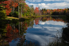 Autumn Reflection (MichellePhotos2) Tags: autumn fall acadia maine nikon d850 nkiond850 reflection water pond color tree trees mountdesertisland prime 35mm