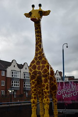 The Giraffe Outside the Discovery Centre (CoasterMadMatt) Tags: city birmingham cities brum englishcities citiesinengland birmingham2019 lego centre giraffe discovery legoland brindleyplace legomodel legogiraffe legolanddiscoverycentre englandssecondcity legolanddiscoverycentrebirmingham discoverycentrebirmingham england model britain models westmidlands midlands legomodels merlinentertainments englishmidlands birminghamattractions attractionsinbirmingham uk greatbritain november autumn photography europe photos photographs gb 2019 unitedkigndom november2019 coastermadmatt coastermadmattphotography autumn2019 nikond3500