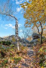 Twisted Tree (Greg Riekens) Tags: hdr trees usa wausau fallcolors autumn ribmountainstatepark nikond500 wisconsin trail fallleaves ribmountain midwest fall statepark rocks