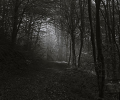 Forest b/w - Wald s/w (1) (Gutnix) Tags: outside nature shadows light blackandwhite bw countryside fog mist wuppertal dasnöckel pentax mono trees pentaxart