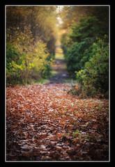 Autumn (1 of 1)-12 (ianmiddleton1) Tags: glasgow autumn autumnal fall nature