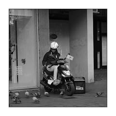 Pigeons eat ... (tinlevla) Tags: streetphotography street xt3 fujifilm namur