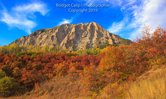 Marcellina Mountain (Bridget Calip - Alluring Images) Tags: 2019 alluringimagescolorado autumn bridgetcalip colorado elkmountains gunnisoncounty gunnisonnationalforest keblerpass marcellinamountain rockymountains sunset allrightsreserved aspen blueskies copyrighted dramaticclouds fallfoliage scruboak