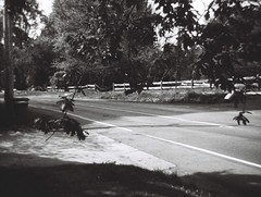 Tree branches and road (Matthew Paul Argall) Tags: kodakgimini fixedfocus 110 110film subminiaturefilm lomographyfilm 100isofilm blackandwhite blackandwhitefilm road street