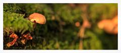 Autumn (1 of 1)-8 (ianmiddleton1) Tags: glasgow autumn autumnal fall nature fungi