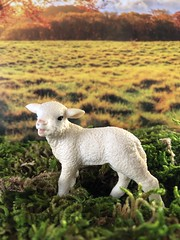 The youngest one (Foxy Belle) Tags: lamb animal diorama miniature fairy tale plants grass