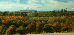 Blencathra (vincocamm) Tags: cumbria lowther castle autumn november orange yellow green trees woods