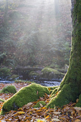 Crying Tree (Alex Kozyr) Tags: autumn leaves tree forest wicklow wicklowmountains sunrise ireland morning