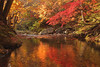3529 (Keiichi T) Tags: 川 木 tree 6d 秋 autumnleaves 森 shadow eos 光 canon autumn 日本 影 水 リフレクション reflection japan forest water light river 紅葉