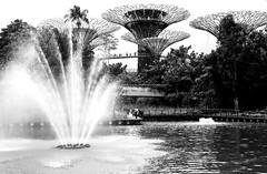 Gardens by the Bay, Singapore (kiwi photo lover) Tags: singapore republic gardensbythebay supertrees dragonflylake ocbc skyway architecture nature trees fountain lake flora bw