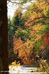 Autumn Foliage 2019 - 36 (Stan S. Gallery) Tags: autumn fall autumnal trees tree nature wet water leaves forest landscape outdoors pond woods october fallcolors foliage canonrebel rock evergreentrees sunlight