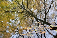 Autumn Leaves (KaDeWeGirl) Tags: newyorkcity bronx vancortlandt park lake reflections leaves autumn