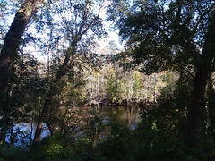 Lumber River Through The Trees. (dccradio) Tags: orrum nc northcarolina robesoncounty outdoor outdoors outside nature natural river lumberriver lumberriverstatepark princessannaccess tree trees branch branches treebranch treebranches treelimb treelimbs sunday autumn fall weekend november sundayafternoon afternoon goodafternoon bodyofwater samsung galaxy smj727v j7v cellphone cellphonepicture