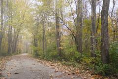 Foggy Day Autumn Bike Trail (Modkuse) Tags: nature natural biketrail fog foggy fujifilm fujifilmxt2 xt2 fujinon fujinonxf1024mmf4rois xf xf1024mmf4rois art woods forest autumn autumnleaves fall fallcolors fallcolor faded