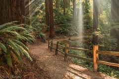 In the spotlight (Maria Echaniz) Tags: spotlight hoytarboretum redwood trail hiking urbannature urbanhike nature light fern woods trees treelovers pacificnorthwest portland pdx oregon outdoors sunbeams