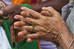 praying hands (Abhijit.sen) Tags: hands textute lines skintexture street skin shapes