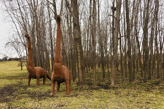 Tumbleweed (jkotrub) Tags: color colorful coloring2019 coloring colour madison travelwisconsin discoverwisconsin explore explorewisconsin hard brown tumbleweed rust texture iron metal epic sculpture apatosaurus brontosaurus dinosaur outdoors outside trees woods tree grass field landscape