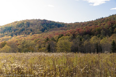 Starting to Color (Singing Like Cicadas) Tags: 2019 autumn outdoors westvirgnia appalachia october countryroads almostheaven nature canaanvalley tuckercounty hillside