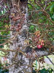 Tropical Fruit Farm (wesbran) Tags: malaysia penang