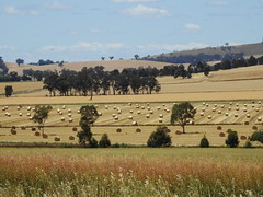 Dookie : harvest time (Lesley A Butler) Tags: victoria dookie australia