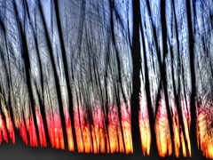 Forest sunset abstract (Lawrence Sibley) Tags: sunset trees icm abstract
