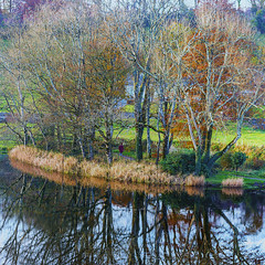 A walk by the lake (Frank Fullard) Tags: frankfullard fullard color colour landscape walking lake winter autumn trees water loch klake reflections tree shadows green blue reeds rushes grass path castlebar turlough mayo irish ireland stroll outdoors exercise red square leaf leaves