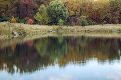 Autumn's Soft Edge (matthewkaz) Tags: crego cregopark park lake water pond reflection reflections fall autumn fallcolors colors season trees lansing inghamcounty michigan 2019