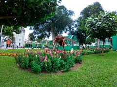 Parque Central de Miraflores (Dani_andrew) Tags: day nature beauty animal lima peru travel perú tree field scene grass gopro7 photo photography