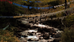 Prayer Flags (ROSS HONG KONG) Tags: stream water prayer banners flags paro bhutan leica m8 noctilux 50mm 095 woods