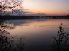 Foulque (scossu) Tags: amaury étang nature lac eau coucher crépuscule nord