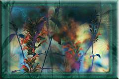Briznas (seguicollar) Tags: art arte artedigital texturas virginiaseguí imagencreativa photomanipulation filterforge briznas flores plantas