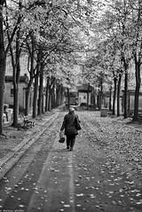 Cultiver les souvenirs (Mathieu HENON) Tags: leica leicam m240 50mm noctilux monochrome laphotodulundi street streetphoto streetlife photoderue bw nb bnw noirblanc blackwhite france paris 14ième arrondissement cimetière montparnasse femme seule arrosoir allée automne