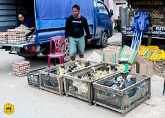 Local market of Nongkhiaw, Laos (Uralistan.roadtrip) Tags: laos tradition culture voyage travel travelling traveling voyager asia asie asiedusudest southeastasia market localmarket marché marchélocal nongkhiaw countryside campagne rural animaux canard duck chicken