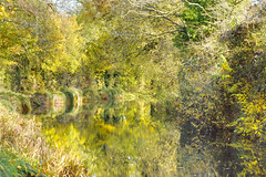 Basingstoke Canal Greywell-North Warnborough-Odiham 10 November 2019 024b (paul_appleyard) Tags: basingstoke canal north warnborough odiham hampshire november 2019 reflection autumn trees leaves colours