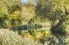 Basingstoke Canal Greywell-North Warnborough-Odiham 10 November 2019 021b (paul_appleyard) Tags: basingstoke canal north warnborough odiham hampshire november 2019 reflection autumn trees leaves colours