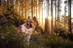 Beautiful November Morning (Carsten aus MK) Tags: dog elo forrest wood sunrise trees morning november sun