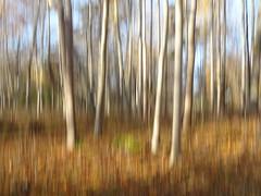 Trees (evisdotter) Tags: trees träd autumn colors light sooc icm intentionalcameramovement abstract nature