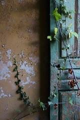 double green (sandrorotonaria) Tags: green door old ruin fall ciociaria