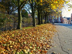 Autumn colours in Preston (Tony Worrall) Tags: autumn seasonal trees fallenleaves fall outdoor natural sunlit beauty dailyphoto photohour leaf leaves nice preston lancs lancashire city welovethenorth nw northwest north update place location uk england visit area attraction open stream tour country item greatbritain britain english british gb capture buy stock sell sale outside outdoors caught photo shoot shot picture captured ilobsterit instragram photosofpreston