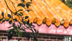 Monastery Tree and Roof (Theen ...) Tags: 2018 hongkong theen brick glossy dininghall red leaves vegetarian lantauisland tree bright monastery roof lumix yellow lunch branches ngongping fascia