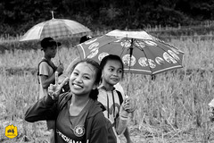 On the way to school, Laotien village (Uralistan.roadtrip) Tags: laos tradition culture voyage travel travelling traveling voyager asia asie asiedusudest southeastasia village countryside campgane rural nongkhiaw école enfant children school ricefields riziere