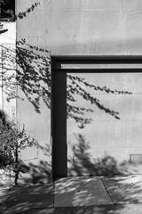 garage (queue_queue) Tags: blackandwhite walls shadows contrast branches garage sidewalk