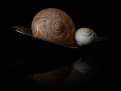 Warm and safe! (Explored) (Ageeth van Geest) Tags: shell stilleven macro reflectie spoon light 17thcentury vermeer stilllife reflection together youandme warm safe explore explored ageethvangeest