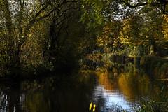 Basingstoke Canal Greywell-North Warnborough-Odiham 10 November 2019 035 (paul_appleyard) Tags: basingstoke canal north warnborough odiham hampshire november 2019 reflection autumn trees leaves colours