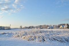 Gimo 11/11 2019 första snön. (johnerlandaxelsson@gmail.com) Tags: gimo uppland sverige vinter natur landskap landscapes johnaxelsson omanipulerad