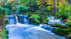 Parc Oriental de Maulévrier (Sebastien.scherrer) Tags: paysage jardin parc eau mousses végétaux maineetloire japonais maulévrier la moine lac artificiel bonsaïs