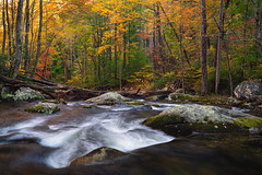 Downstream Flow (Travis Rhoads) Tags: 2019 sonyilce7rm2a7rii sonyfedistagont35mmf14za reallyrightstuff ba72l bh55 rrspcl1 tvc33 formatthitechfirecrest2stopnd leecircularpolarizer leefoundationkit fallcolor flowingwater landscapephotography mountains nationalpark nikcollectionbydxo trees copyright2019 travisrhoadsphotography water tennessee tremont lynncampprong