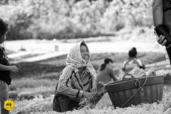 Laotian farmers (Uralistan.roadtrip) Tags: luangprabang laos tradition culture rue voyage travel travelling traveling voyager asia asie asiedusudest southeastasia farmer fermier laotianfarmer fermierlaotien agriculture organic biologique