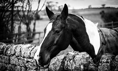 Stainton . (wayman2011) Tags: canon5d colinhart lightroom5 wayman2011 bw mono rural horses villages pennines dales teesdale stainton countydurham uk